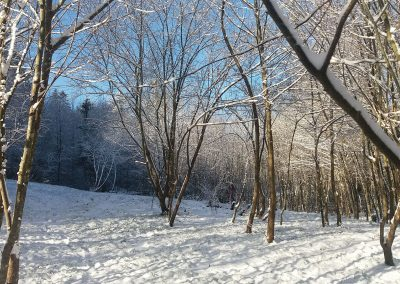 snow-in-woodland-area
